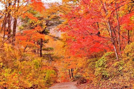 秋保大滝植物園の紅葉
