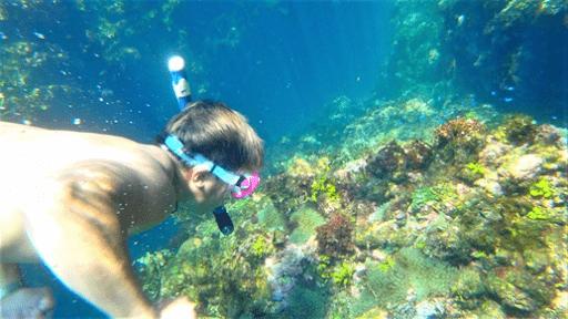 伊豆の海シュノーケル