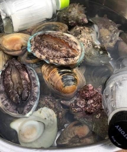 サザエ、あわび、ホンビノス貝